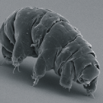 World's hardiest animal has evolved radiation shield for its DNA