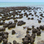 Organic Matter Found in 3.5-Billion-Year-Old Stromatolites