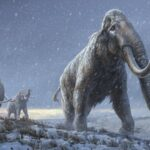 Million-year-old mammoth genomes shatter record for oldest ancient DNA
