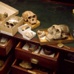 Fossils and ancient DNA paint a vibrant picture of human origins